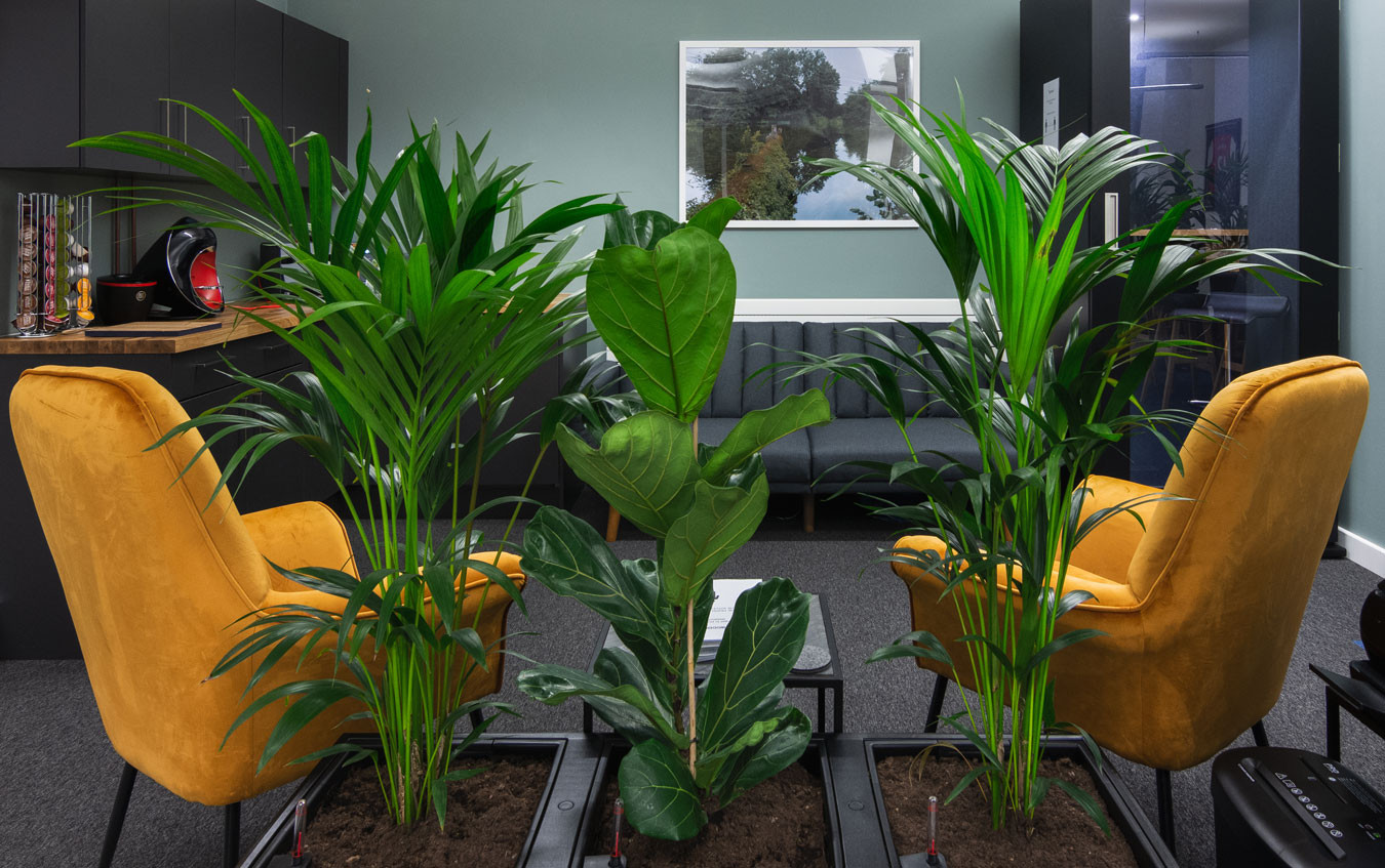 A row of office plants used a room divider for the 1account team breakout area with kitchenette, sofa and yellow armchairs
