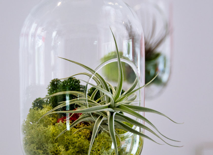 Close up of hanging glass planters adding a touch of nature and plants within commercial interior design