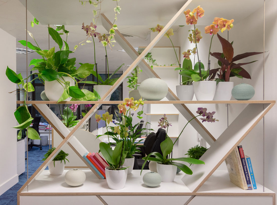A bespoke wall designed as a divider between office reception area and workstations elevated with colours and plants that creates a light atmosphere in the space