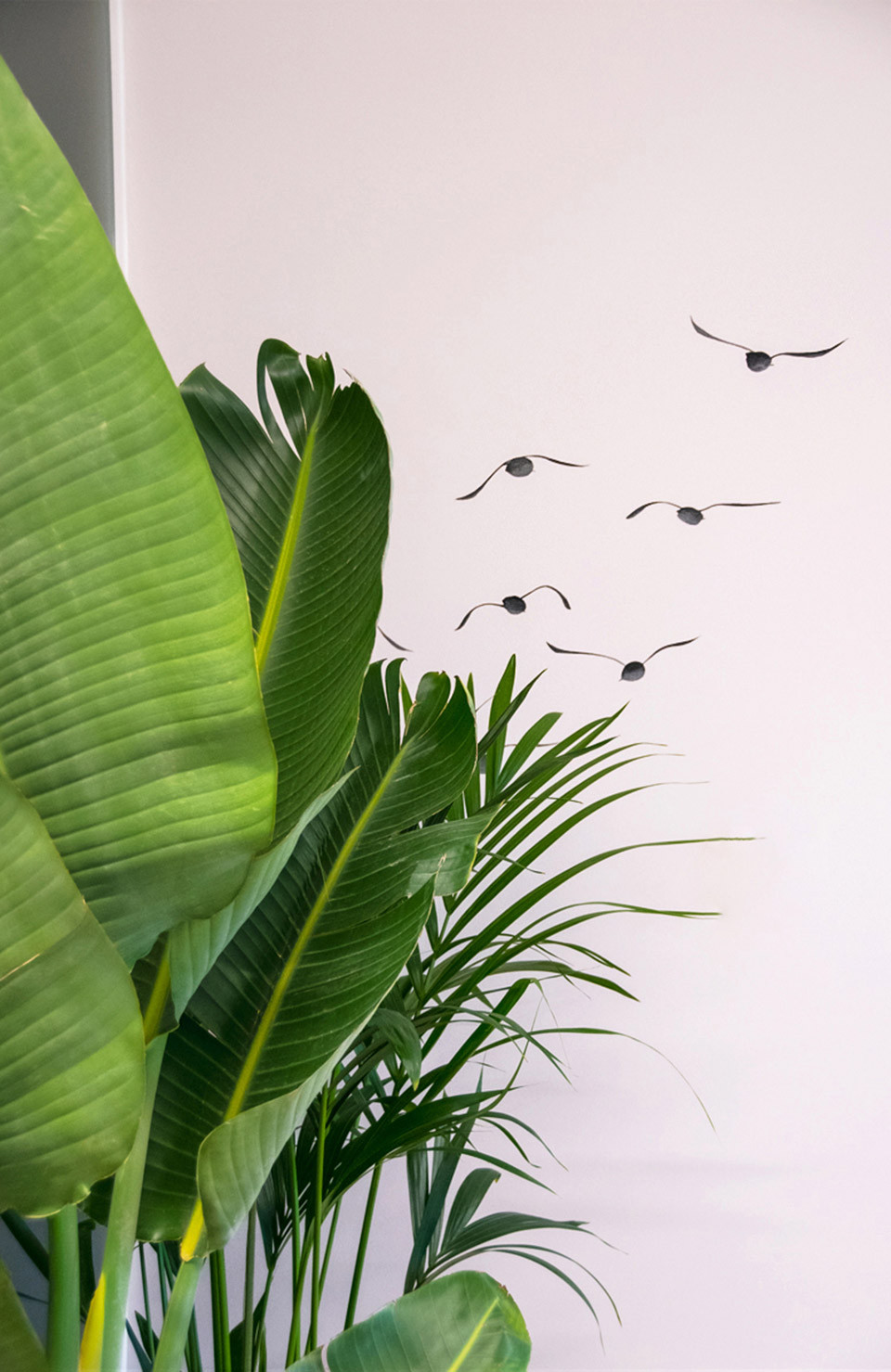 Hand drawn birds as wall art to represents our clients branding around freedom and innovation within dentistry and its importance in the dental office interior design